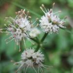 pflanzenjuni08a 041